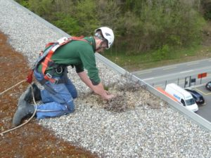 Ein Mitarbeiter von Böhi + Wirz arbeitet auf einem Flachdach. Dachsanierung lohnt sich