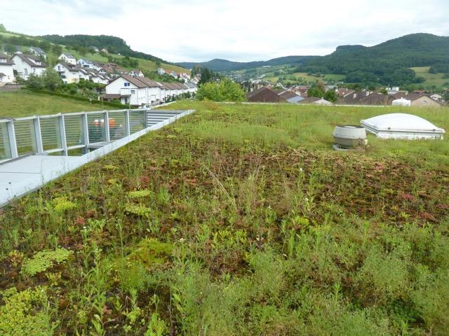 Ein schön begrüntes Flachdach das dicht hält von der Firma Boehi + Wirz AG. Regelmässie Kontrollen sichern die Funktion Ihres Daches.